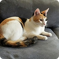 Adopt A Pet :: Mona - Sarasota, FL