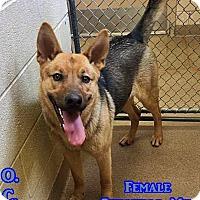 Adopt A Pet :: 1-6 Daisy - Triadelphia, WV