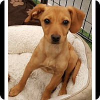 Adopt A Pet :: SUSIE - Winchester, CA