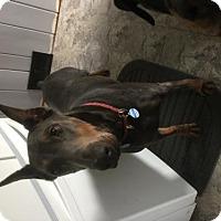 Adopt A Pet :: Rizzo - Bristolville, OH