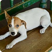 Adopt A Pet :: Milly - San Antonio, TX