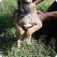 Adopt A Pet :: Eve - Barnwell, SC