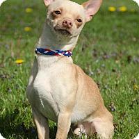 Adopt A Pet :: ROCKO - Sandusky, OH