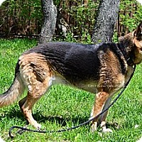 Adopt A Pet :: Tori - Indianapolis, IN