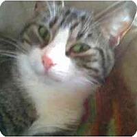 Adopt A Pet :: Jewel - Proctor, MN