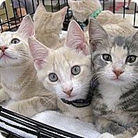 Adopt A Pet :: Buffett - Vero Beach, FL