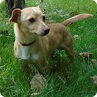 Adopt A Pet :: Jim - Gary, IN