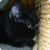 Adopt A Pet :: Isabelle - Hamburg, NY