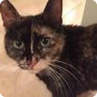 Adopt A Pet :: Sabrina - East Hanover, NJ