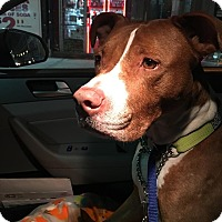 Adopt A Pet :: Rob - Long Beach, NY