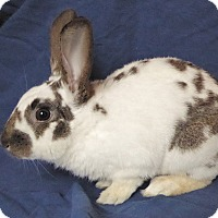 Adopt A Pet :: Austin - Alexandria, VA