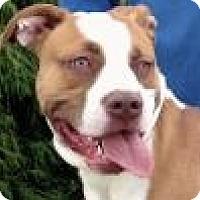Adopt A Pet :: Walker - Evansville, IN