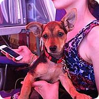 Adopt A Pet :: Kip - North Hollywood, CA