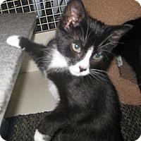 Adopt A Pet :: Thalia - Dallas, TX