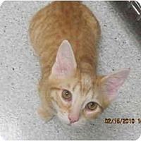 Adopt A Pet :: Cecil - Los Angeles, CA