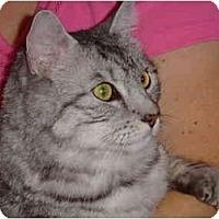 Adopt A Pet :: Gizmo - Modesto, CA