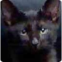 Adopt A Pet :: Cairo - Fort Lauderdale, FL