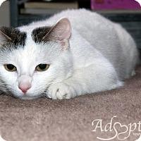 Adopt A Pet :: Zoey - Edmonton, AB