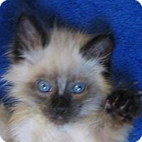 Adopt A Pet :: Sparkie Bear - Davis, CA