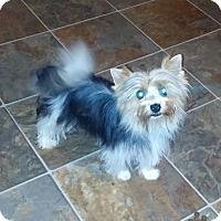 Adopt A Pet :: Jones - oakland city, IN