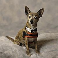 Adopt A Pet :: Coco - Aqua Dulce, CA