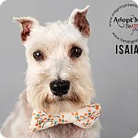 Adopt A Pet :: Isaiah-Pending Adoption - Omaha, NE