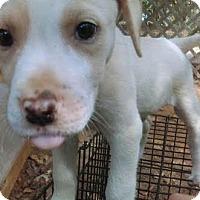 Adopt A Pet :: Cisco - North Brunswick, NJ