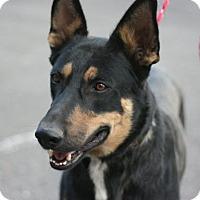 Adopt A Pet :: Kobe - Canoga Park, CA