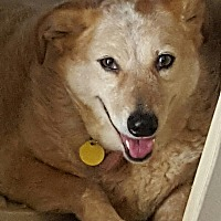 Adopt A Pet :: Sally aka JAYLO - Cranston, RI