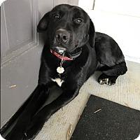 Adopt A Pet :: Benz - Jackson, GA