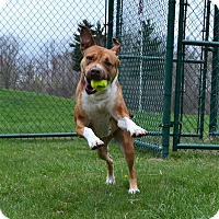 Adopt A Pet :: Zoey - Michigan City, IN