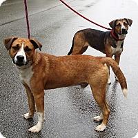 Adopt A Pet :: Copper - Newport, NC