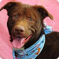 Adopt A Pet :: Andy - Cokato, MN