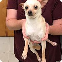 Adopt A Pet :: Gerardo - Westminster, MD