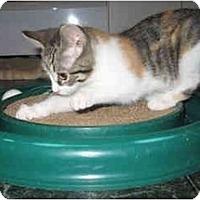 Adopt A Pet :: Trudy, Tootsie,Tinker - Cincinnati, OH