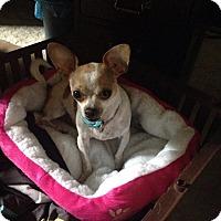 Adopt A Pet :: Star - Lorain, OH