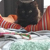 Adopt A Pet :: Dakota - Virginia Beach, VA