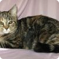 Adopt A Pet :: Zalina - Powell, OH