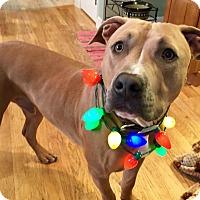 Adopt A Pet :: Murphy - North Haledon, NJ