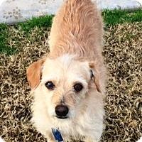 Adopt A Pet :: Rudy - Gilbert, AZ