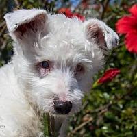 Adopt A Pet :: O'Malley - Seal Beach, CA