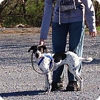 Adopt A Pet :: Harlow - Breinigsville, PA
