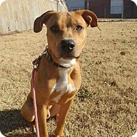 Adopt A Pet :: Copper - Wichita, KS