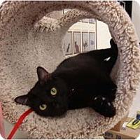 Adopt A Pet :: Alex - Owasso, OK