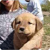 Adopt A Pet :: Jackie - Phoenix, AZ