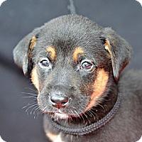 Adopt A Pet :: James Earl Jones - Plano, TX