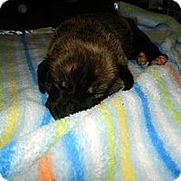 Adopt A Pet :: Rome - Honaker, VA
