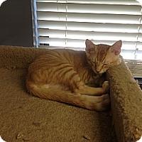 Adopt A Pet :: Mr. Bates - Lake Charles, LA