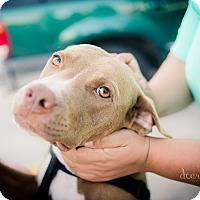 Adopt A Pet :: Brutus - San Antonio, TX
