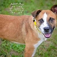 Adopt A Pet :: Dale - Fort Valley, GA